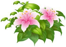 Roze leliebloemen in groene struik