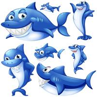 Blauwe haaien in verschillende posities