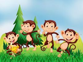Vier apen in het veld