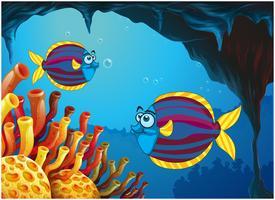 Twee kleurrijke vissen binnen de grot onder de zee