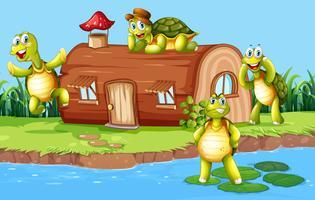 Schildpad in het houten huis vector