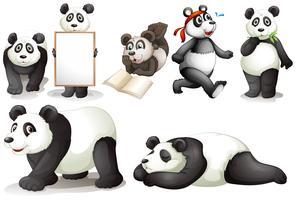 Zeven panda's vector