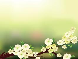 Een briefpapier met verse witte bloemen