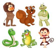Zes verschillende soorten dieren in de jungle vector