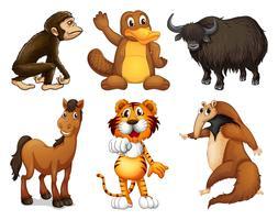 Zes verschillende soorten dieren met vier poten