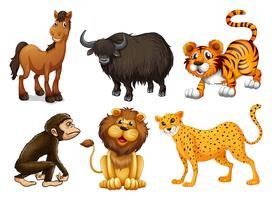 Verschillende soorten dieren met vier poten vector