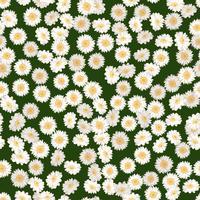 Kamille naadloze patroon. Madeliefjes op groene achtergrond. vector