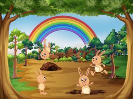 Leuke konijnen in de natuur