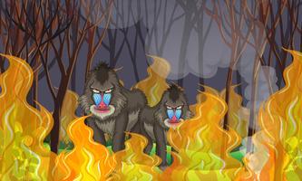Bavianen in het bos Wildfire