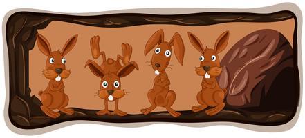 Een konijnenfamilie in het hol