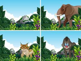 Een prachtige natuur en dieren in het wild vector