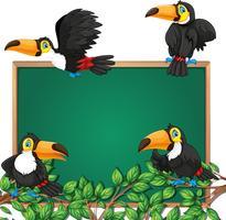 Toucan op schoolbord frame vector