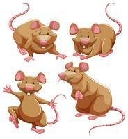 Bruine rat in verschillende poses vector