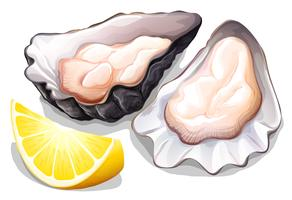 Oester vector
