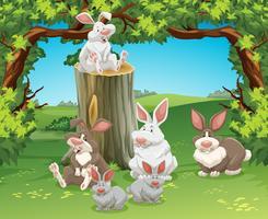 Zes konijnen in de tuin