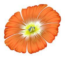 Een oranje bloem vector