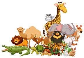 Verschillende soorten wilde dieren samen vector