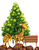 Twee giraffen door het houten bord vector