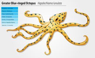 Blauw-geringde octopus vector