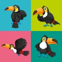 Toucan in vier frames