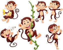 Kleine apen die verschillende dingen doen