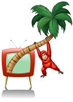 Urangutan die op de kokosnotentak hangt vector