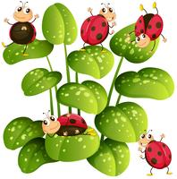 Lieveheersbeestjes op groene bladeren vector