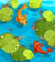 Twee vissen die in de vijver zwemmen