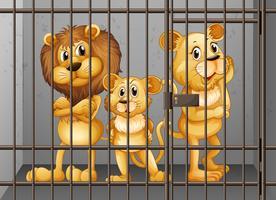 Leeuwen worden opgesloten in de kooi