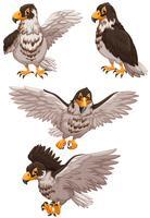Vier adelaars in verschillende poses