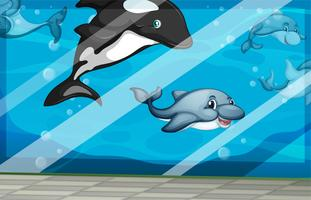 Dolfijnen zwemmen in de aquariumtank vector
