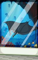 Stingray en vis in het aquarium vector