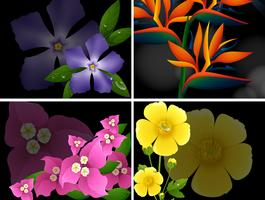 Vier verschillende soorten bloemen op zwarte achtergrond
