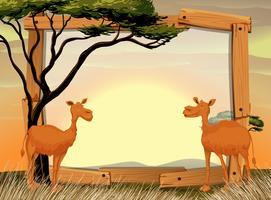Grensontwerp met twee kamelen op het veld