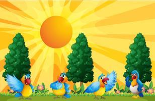 Papegaaien in het veld vector