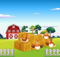 Vier kippen in het hooi met een schuur aan de achterkant