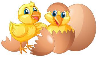 Twee kleine kuikens die eieren uitbroeden