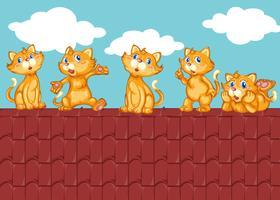 Vijf kittens op het rode dak