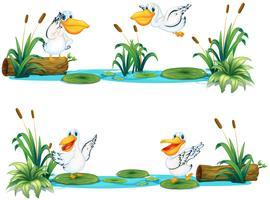 Pelikanen vliegen over de vijver