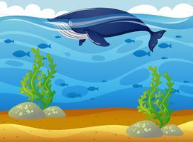 Walvis die in de zee zwemt