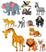 Verschillende soorten wilde dieren