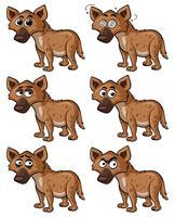 Hyena met verschillende gezichtsuitdrukkingen