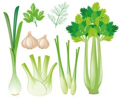 Verschillende groentesoorten vector