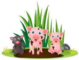 Drie kleine varkens die in modderige vulklei spelen