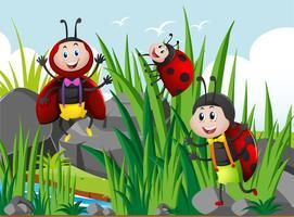 Drie lieveheersbeestjes in de tuin vector