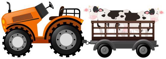 Oranje tractor met twee koeien op wagen