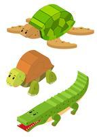 3D-ontwerp voor schildpad en krokodil