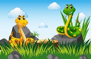 Twee slangen in de tuin