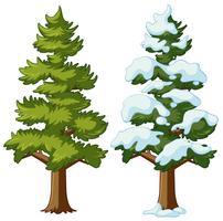 Dennenboom in twee seizoenen