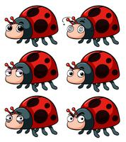 Verschillende emoties van lieveheersbeestjes